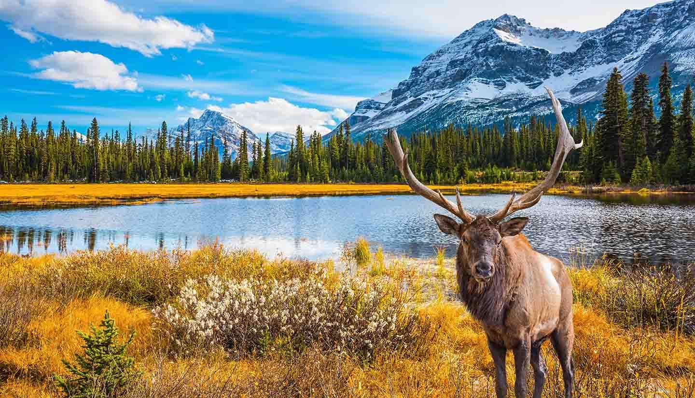 Comment s'organise un voyage linguistique au Canada?